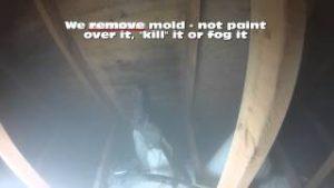 Mold Eradication