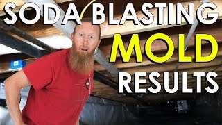 Black Mold Removal Cost Mountain City