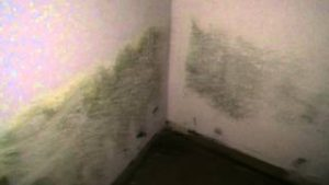 Mold Under House