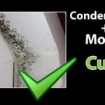 Mold Removal Companies