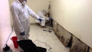 Detecting Black Mold In The Home Lometa