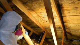 Home Mold Inspection Cost Volente