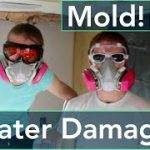 Mold Inspection Cost