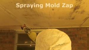 Mold Allergy Relief