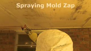 Mold Lawsuit