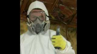 Mold Cleanup Cost Milano