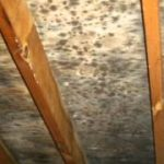 Mold Eradication