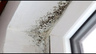 Mold On Wood