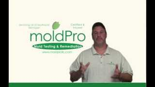 Mold Inspection Cost Thrall