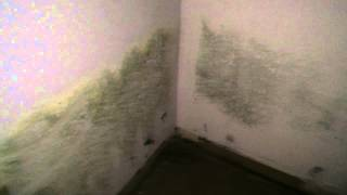 Mold Remediation Services Hays
