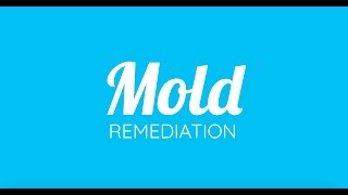 Mold Restoration Driftwood