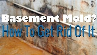 Mold Treatment Coupland