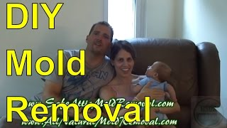 Cost To Remove Mold From House Jonestown