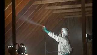 House Mold Removal Lometa
