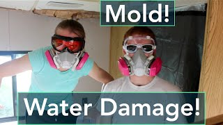 Home Mold Removal Cost Lakeway