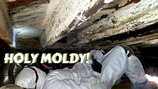 Mold Air Test Bee Cave