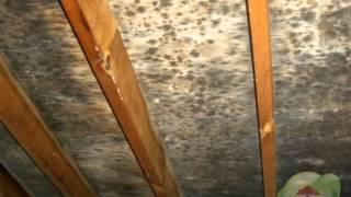 Mold Inspection Service McDade