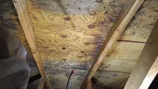House Mold Inspection Creedmoor