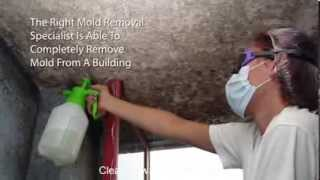 Mold Inspection And Testing Jarrell