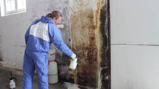 Mold Remediation Cost San Leanna